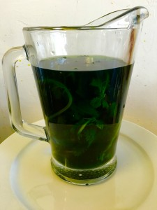 Fresh Green Nettle Tea